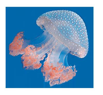 Spray protettivo meduse Respingo Jellyfish